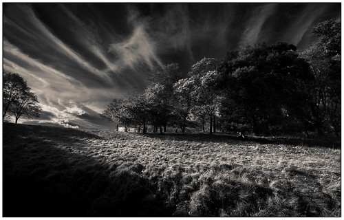 trees park clouds sky grass phoenix dublin black white