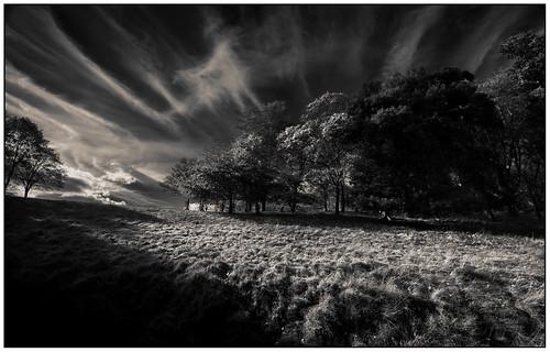 trees park clouds sky grass phoenix dublin black white