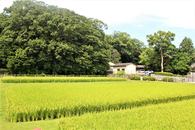 izawanomiya050