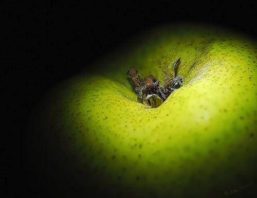B-Food. Be Birne. | by Silke Klimesch