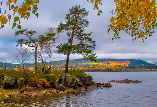 water lake shore trees branches birches pines forest wood hill hillside autumn fall maridalen maridalsvannet lakemaridal oslo norway