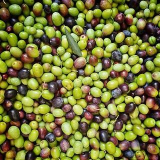 Olives #olives #green #oil #pattern #garda #gardasee #oil #photooftheday #picoftheday #igers #igersitalia #igersgarda #work #family #life #harvest #oliveharvest #autumn | by Mario De Carli