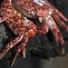 Dead Crab Eyes by Cornelli2010