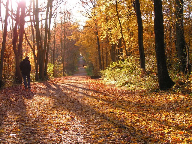 Forêt de Bondy 03