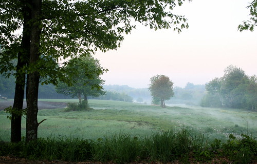 early morning meadow | by Muffet