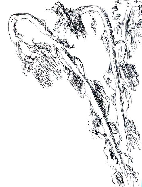 flowers drawings ink on paper flower drawing raphael perez israeli painter