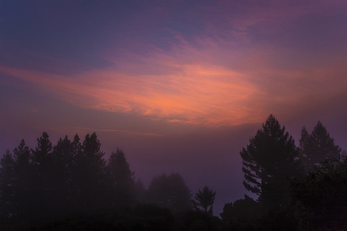 canon6d misty dawn morning sunrise trees silhouette nature outdoors usa california