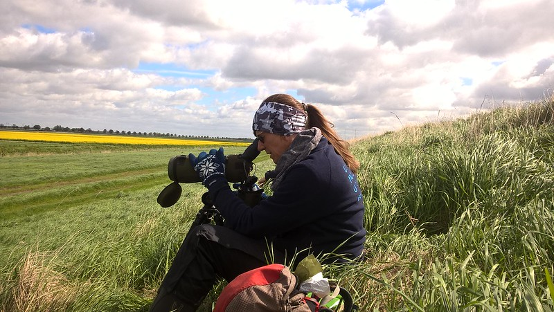 Jen Smart watching a godwit nest - Ian Dillon