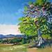 'The oak tree', 51x36, Oil on board