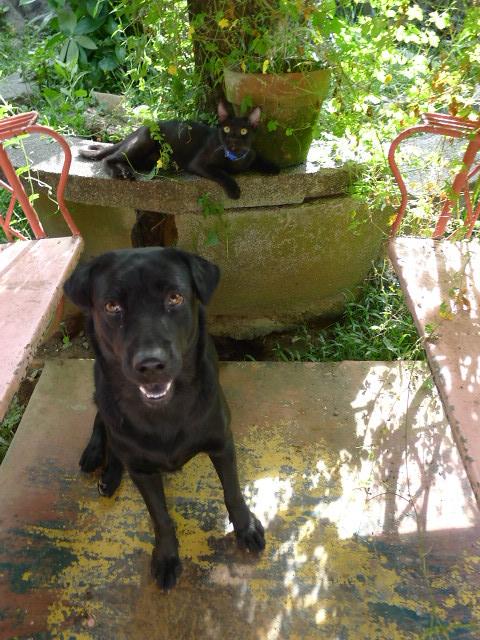 black cat & black dog