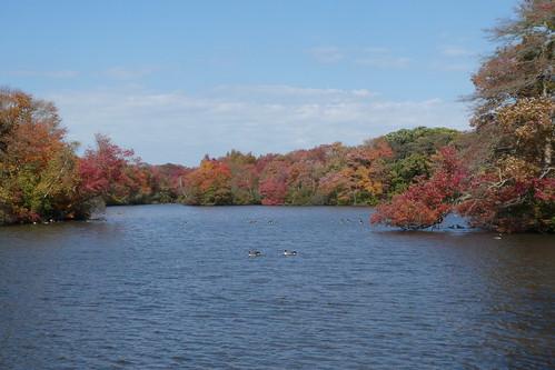 belmont statepark park fall foliage longisland lake water