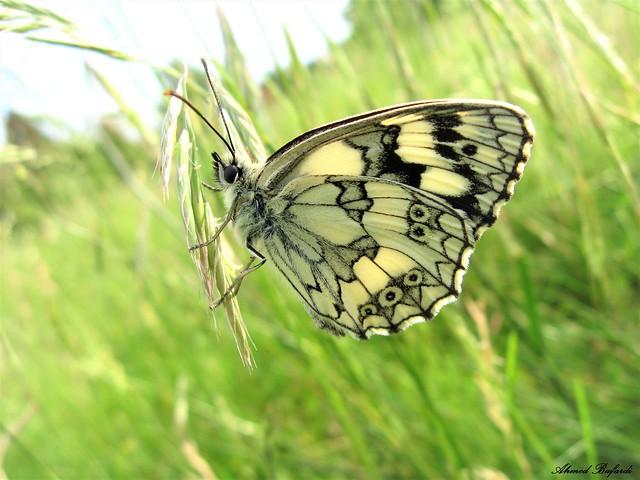 Butterfly 1741