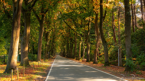 Autumn Road   by BraCom (Bram)