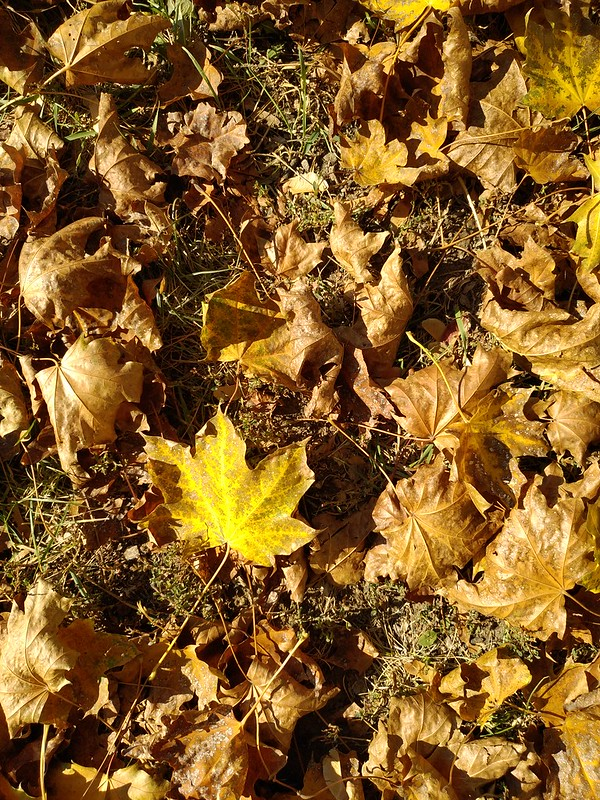 Fallen leaves texture