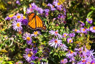 Flying Butter | by VBuckley.com