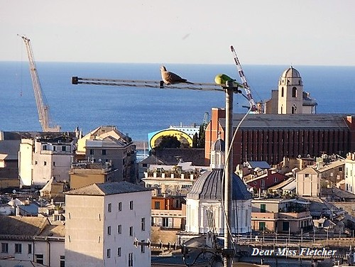 Genova (3) | by Dear Miss Fletcher