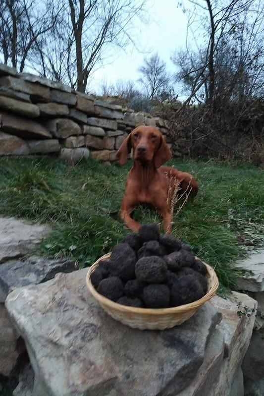 Truffle Hunting & Tasting in Transylvania (4)