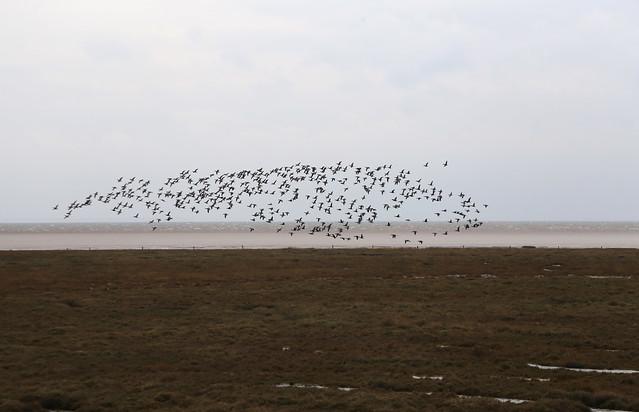 Birds on Toft Marsh