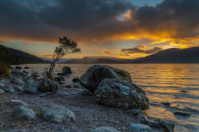 Loch Ness Loner ..