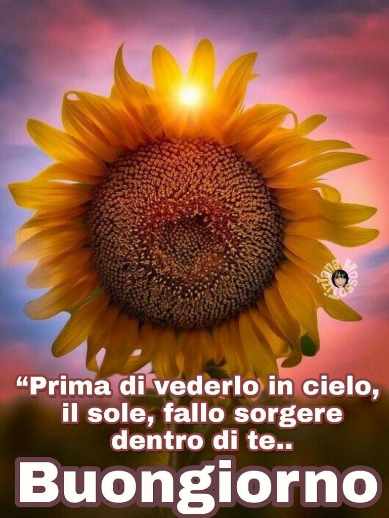 Buongiorno Sole Girasole Flowers Page Facebook Tiziana