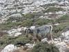 Naxos, výstup na Mount Zeus, foto: Petr Nejedlý