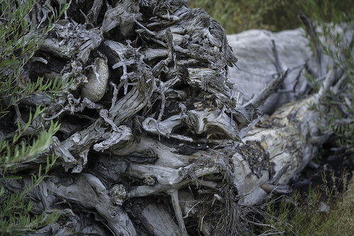 Genocide | by Trail Image