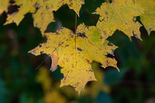 Week 45: Fall/Autumn | 2018 Project 52 | by walkerkp