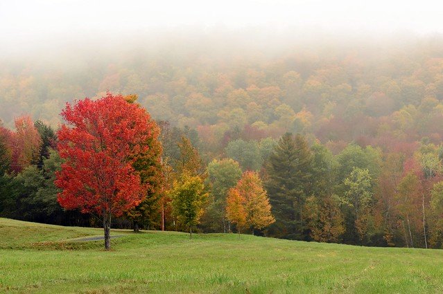 Misty Fall Morning in Vermont