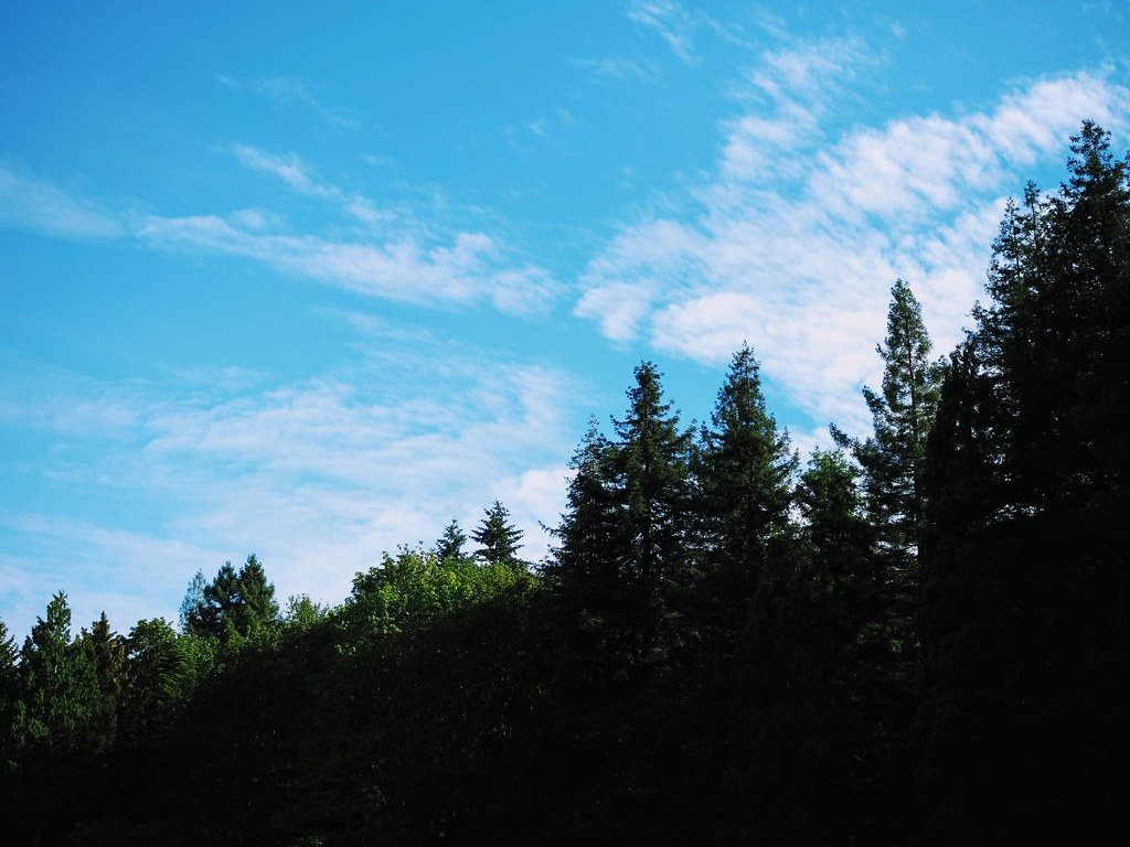 Sunny blue skies with painted clouds and a slope of trees