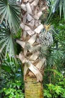 Botanischer Garten Jena Manni0656 Flickr