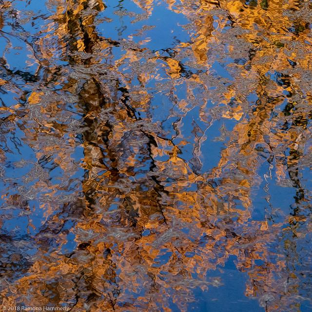 Larch Reflection