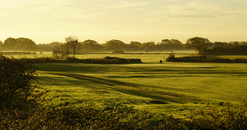 clevedon somerset england uk gb britain outdoors morning sunrise sony alpha a7rii zeiss ilce7rm2 fields sky earth mist cows trees green grass horizon landscape open clouds fog colour color