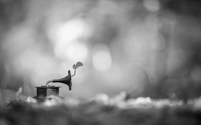 Az élet melódiája