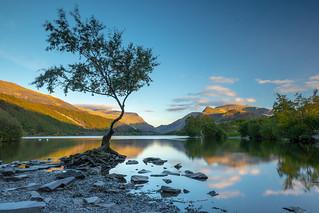 Lonely Tree in Llanberis
