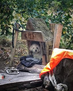 Regelmäßig bei uns im Einsatz: Rettungshund Emsi. 🐕 Ihr fehlen zwar ein wenig die Berge 🗻, aber eine Hütte hat sie ja.  #Rettungshund #immeraufderhut #ichsehealles