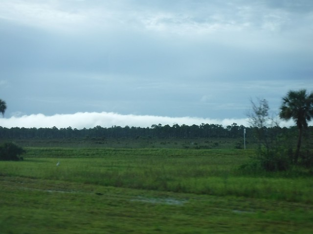 Alligator Alley