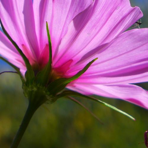 flower power   by nchenga