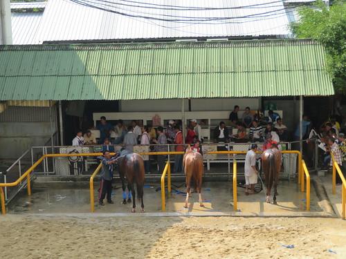 ロイヤルバンコクスポーツクラブの馬房