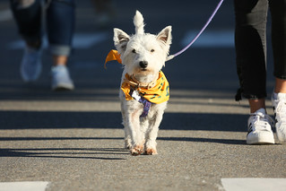Even a few proud pups strutted their stuff in the Homecoming Parade. | by William & Mary Photos