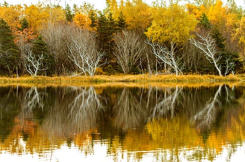 tree trees kentspond grandconcourse canada atlanticcanada avalonpeninsula reflection reflections forest woods pond water autumn yellow orange stjohns eastcoast october fall weathered landscape scenery scenic