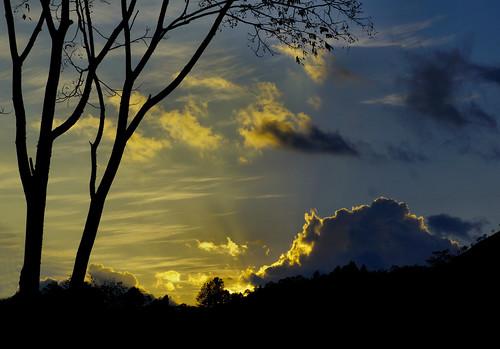 sky trees sunset sonya6000