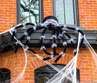 Giant Tarantula Spider Weaves It Web All Set For Halloween
