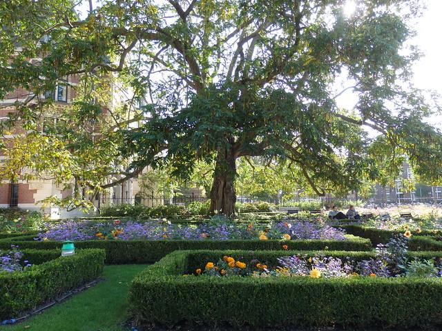 Wingnut tree in the Rijksmuseum garden