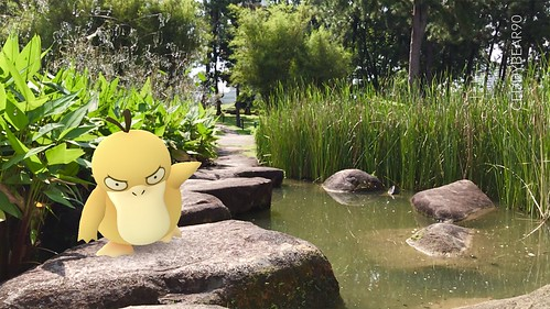 054 Psyduck (position=left)