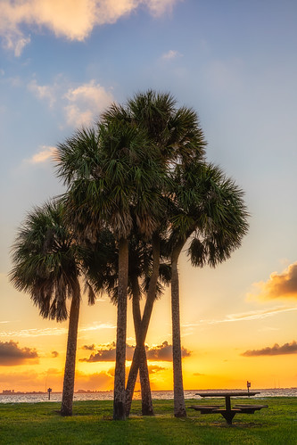 florida natureparks picnicisland sunset tampa unitedstates us