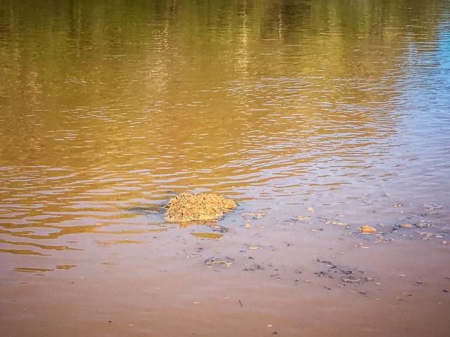 Boyd Mill Pond-53