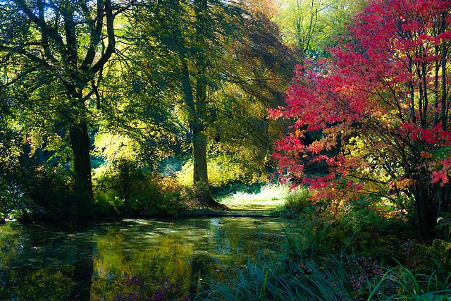 Autumnal Pond Scene