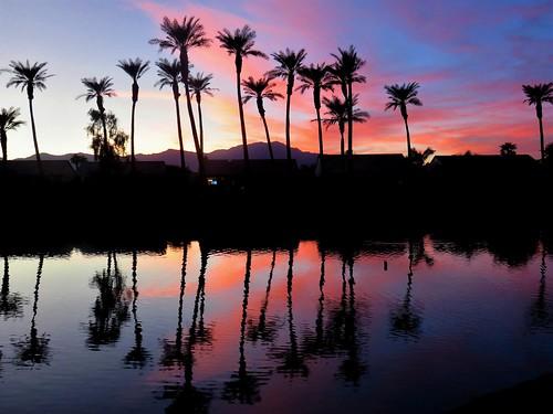 trees palm california southern palmdesert color sky photography water reflection twilight desert oasis double neighborhood dusk pink hues pastel moonjazz