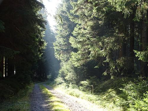 pflanze nature natur pflanzen thüringen landschaft landscape wald bäume trees