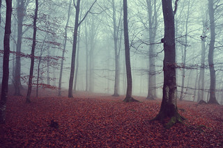 ...among trees..., embraced by a mist...